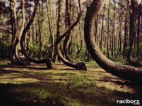 Konkurs Drzewo Roku