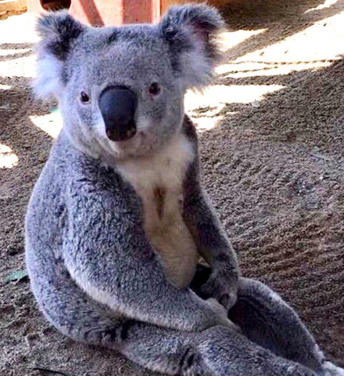 australia jak wrocław łukasz pietrzyk