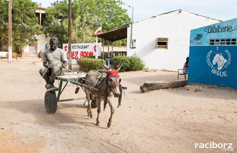 Afrykańska przygoda z widmem wojny w tle