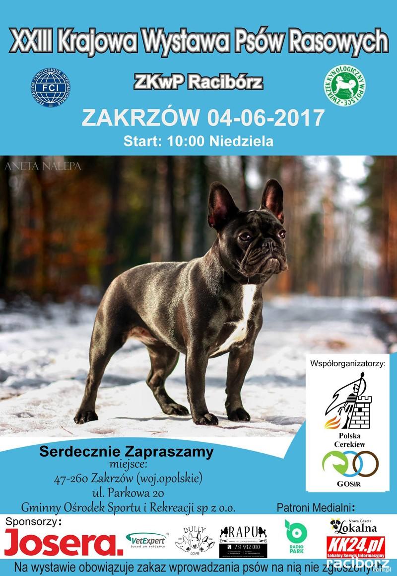krajowa wystawa psow rasowych raciborz zakrzow