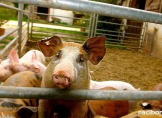 Choroby zwierzęta