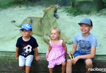 gok kornowac zoo ostrava