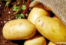 kartofelfest