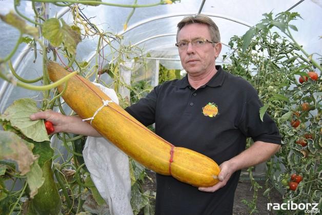 Raciborzanin Piotr Holewa i największe warzywa w kraju