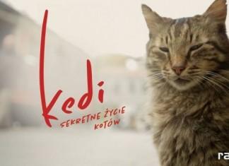 kedi sekretne zycie kotow