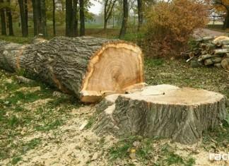 Wycinka drzew.