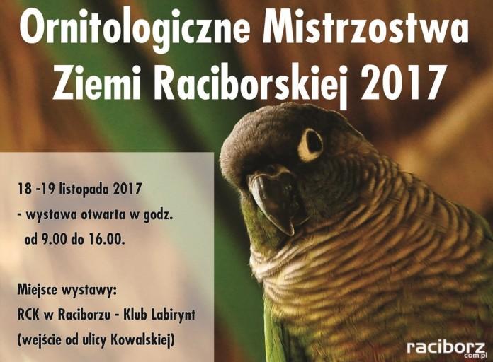 Racibórz, Klub Labirynt: Wystawa Ptaków Egzotycznych