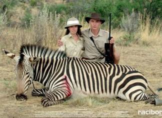 """Safari""."