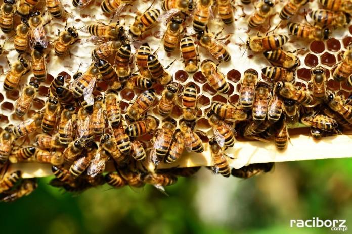 Szkolenie pszczelarskie w Tworkowie