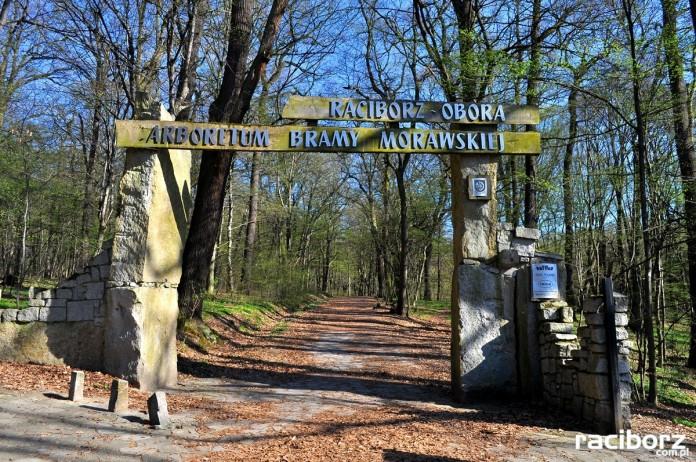 arboretum-bramy-morawskiej-raciborz-wiosna