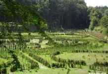 Platforma widokowa w Arboretum ma stanąć jeszcze tego lata