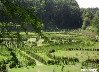 Co dalej z platformą widokową w Arboretum? Wykonawcy są za drodzy