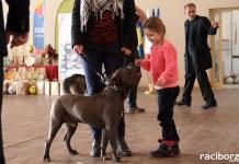 Wystawa psów w Rudy