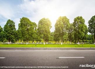 800 drzew na 800-lecie praw miejskich Raciborza