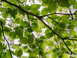 konkurs ekologiczny Racibórz