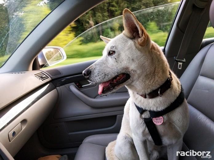 Rudy: Uratowali zamkniętego w samochodzie psa