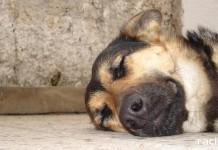 porzucanie psow w okresie letnim