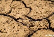 Rolnicy zgłaszają straty spowodowane suszą.