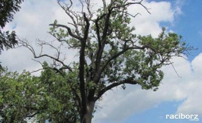 Wycinka 6 obumarłych drzew