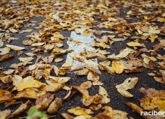 Jesień na drogach