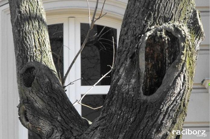 Drzewa na Pl. Wolności