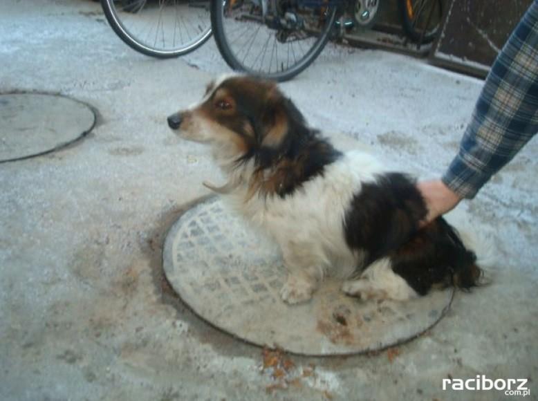 pies znaleziony krzanowice2