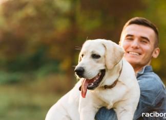 czipowanie psa racibórz