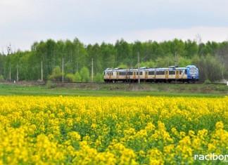 Pociąg Kolei Śląskich w Raciborzu