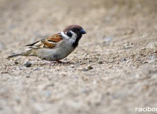 Pojenie zwierząt wiosną i latem