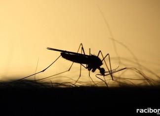 komar odkomarzania gmina krzyzanowice