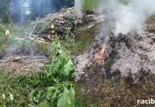 Straż Miejska w Rybniku spalanie odpadów zielonych