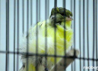 Wystawa ptaków egzotycznych w Labiryncie
