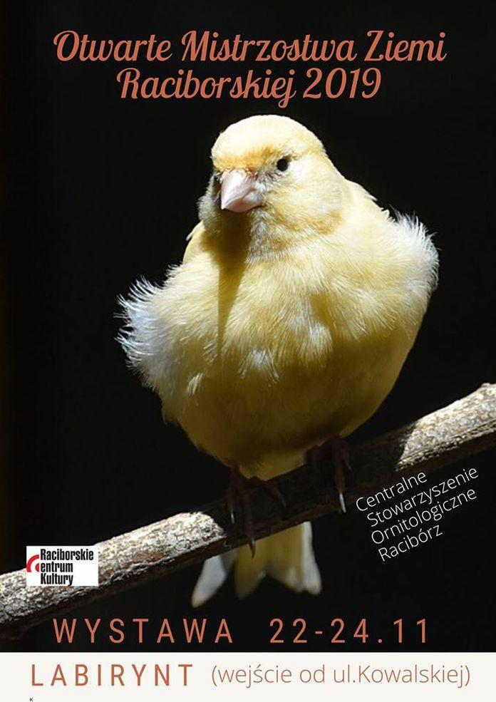 wystawa ptakow