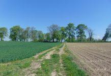 Powiatowa operacja scalania gruntów w gminie Pietrowice Wielkie