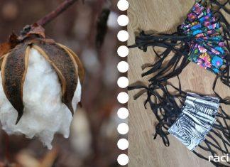 Zbiórka bawełny