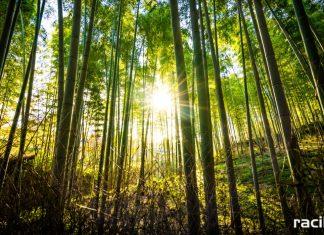 Lasy otwarte