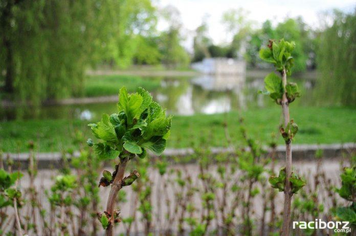 Wiosna w Parku im. Miasta Roth