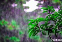 deszcz woda rosliny