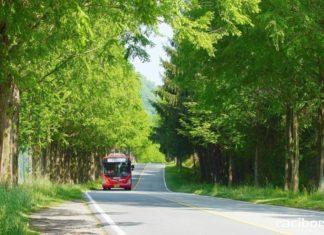 droga drzewa