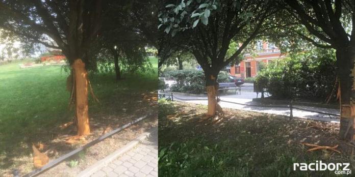 Zniszczenie drzewa