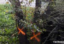 drzewa raciborz