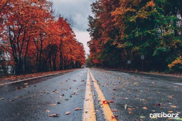 droga jesien