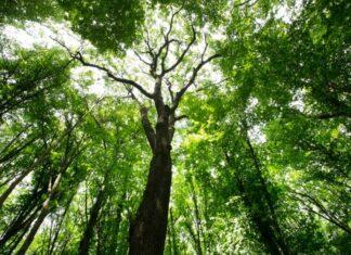 drzewo las