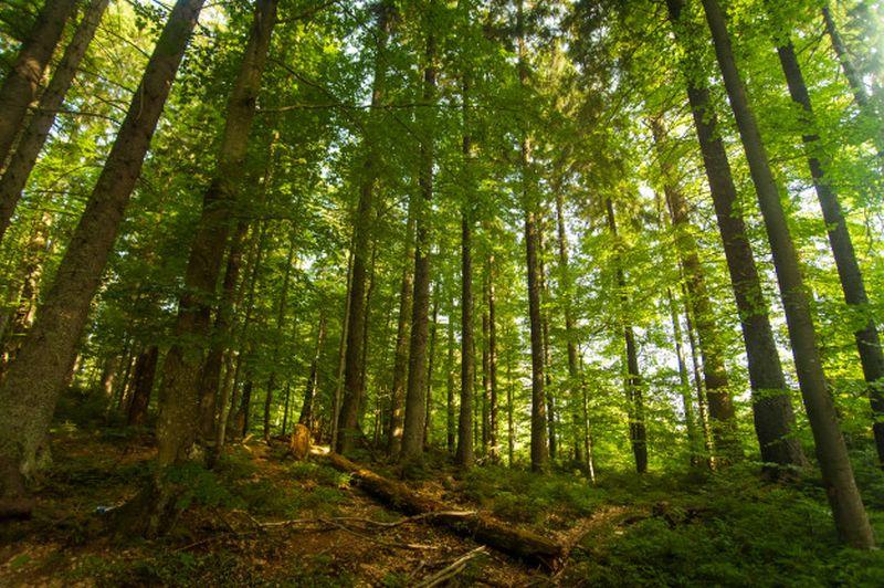 las drzewa zielen