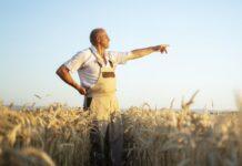 rolnik pole zboze