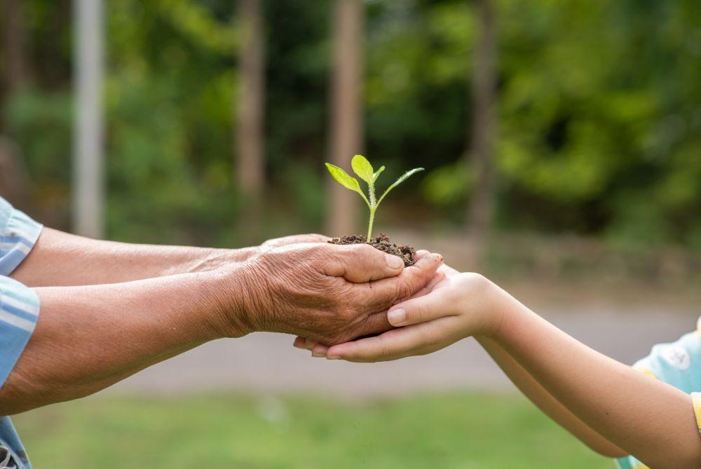 ekologia drzewo sadzonka