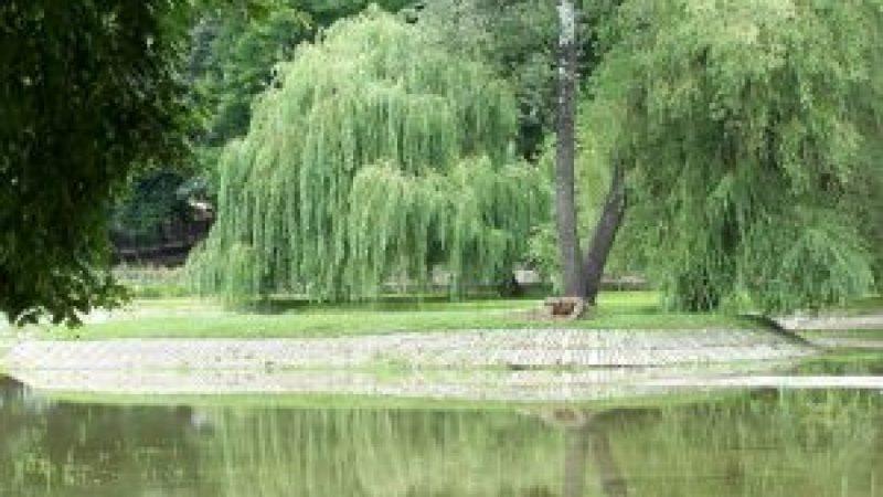 Park im. Miasta Roth