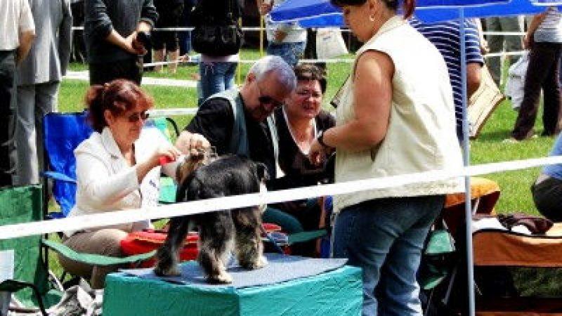 Wystawa psów na stadionie PWSZ