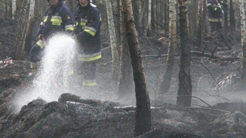 Wielki pożar w lesie w Rudach