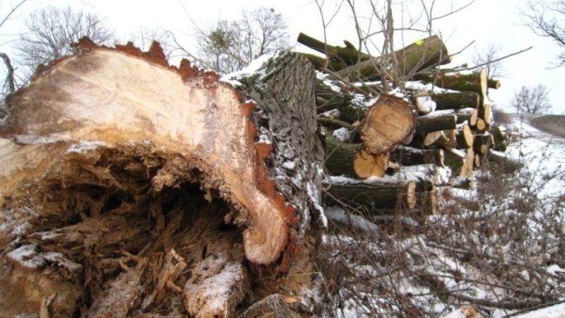 Zbiornik Racibórz Dolny: wycinka drzew